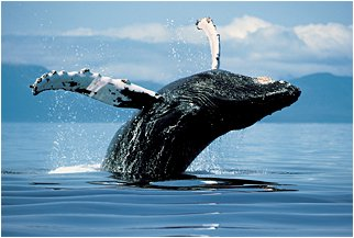 whales_related_articles_1[1]