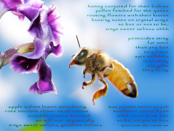 To Bee Song Honey Bee Hover