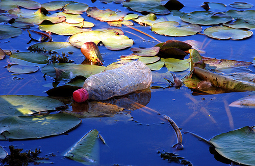 by Leonard John Matthews : bottle on a lily pad : on a lily pad in Humpybong Creek, Redcliffe, a discarded bottle spoils the scene.