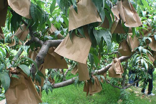 Paper Bag Tree via flickr.com via jumphigh / eddiejdf