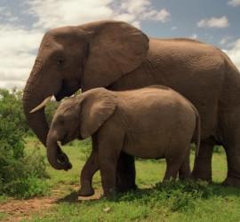 ElephantMimBabe