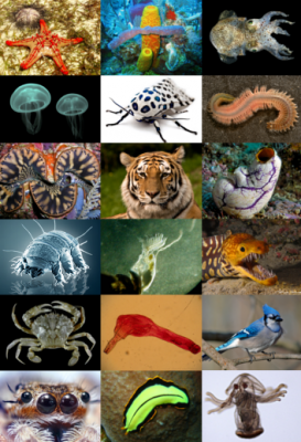 Animal_diversity[1]