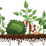 GardenVeggiesEcoMotionEconet